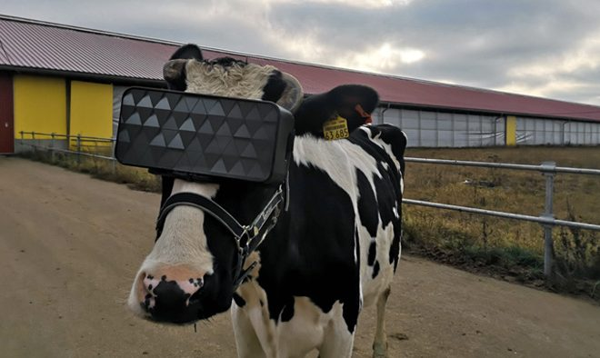 VR Cow